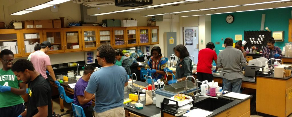 Students doing lab work in teaching lab during Phage Hunters BIOL 302L class.