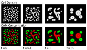Computational simulations of cell sorting behaviors due to differential cell adhesion