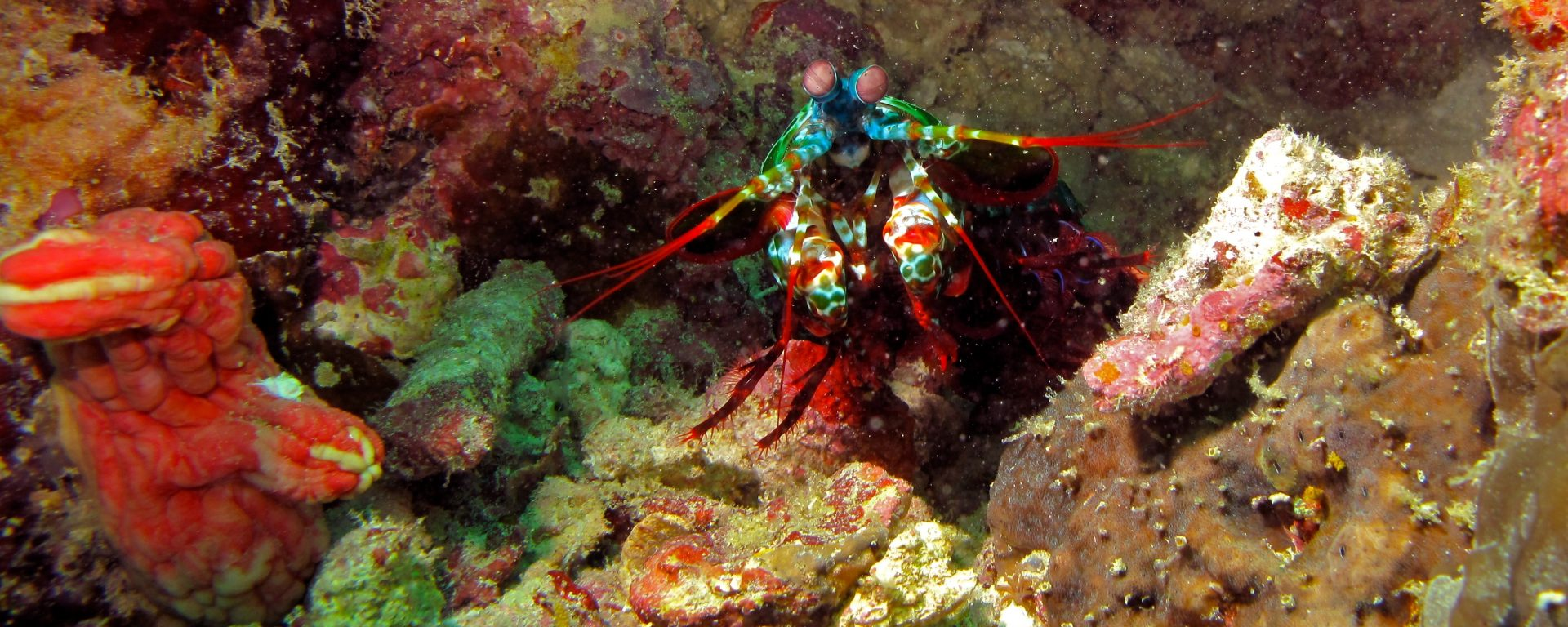 UMBC's Rickesh Patel determines how mantis shrimp find their way home
